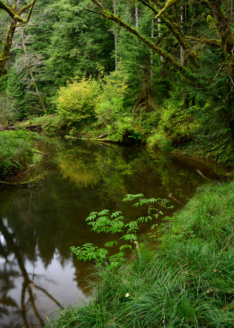 Autumn, North Nemah River, Washington, 2020