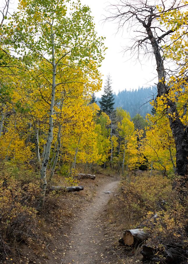Path Through Autumn 3 Photography Art | Leiken Photography
