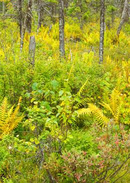 Black Spruce Bog, KWWNM