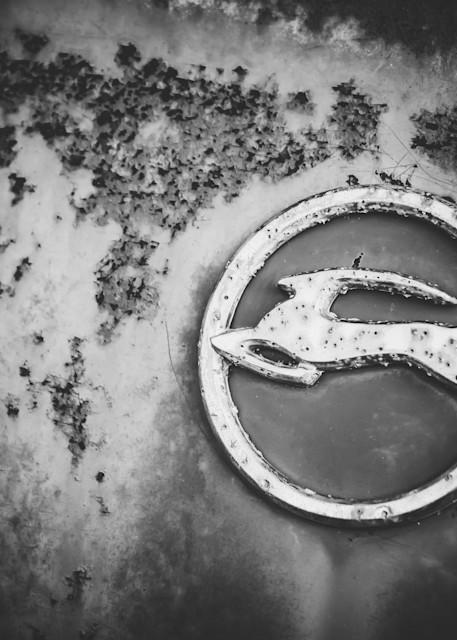 Impala Photography Art | Scott Krycia Photography