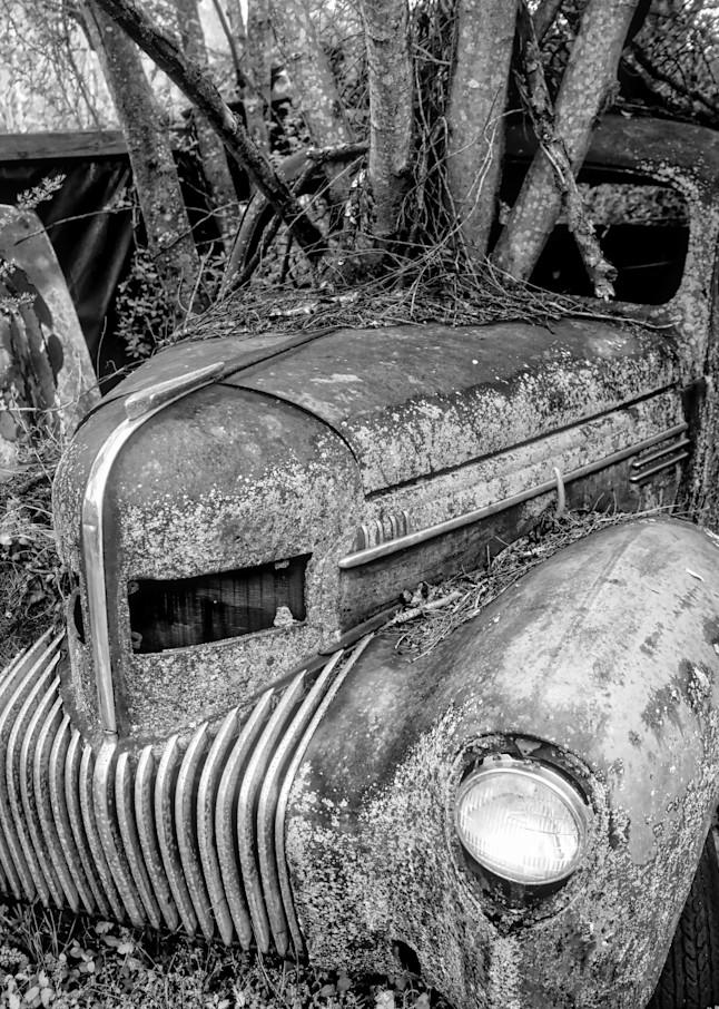 Planted Photography Art | Scott Krycia Photography