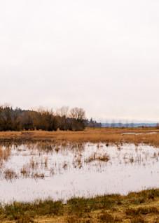 Nisqually Panoramic, Thurston County, Washington, 2016