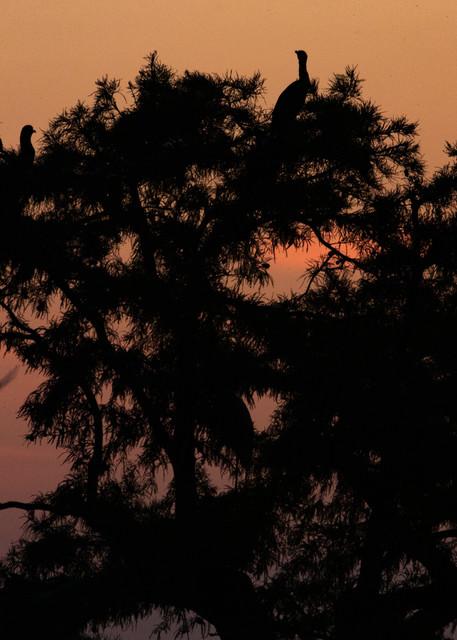 Egret Tree Sunrise     8417 Rlt20 Art | Koral Martin Fine Art Photography
