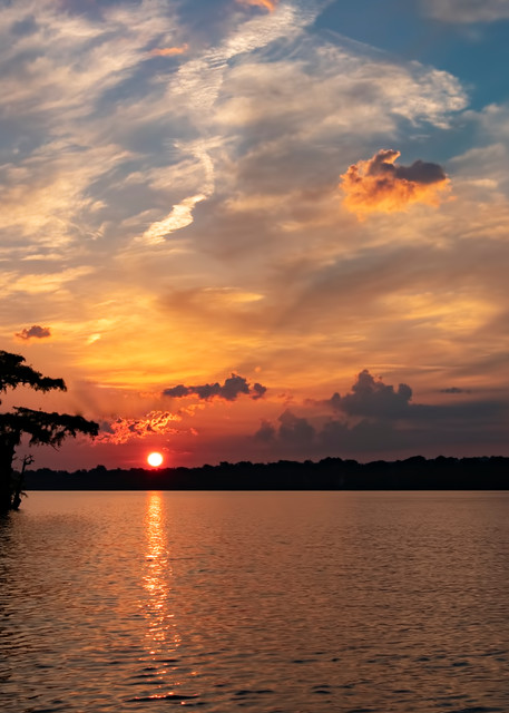 Sunrise Lone Cypress  7950 Reelfoot Lake Art | Koral Martin Fine Art Photography