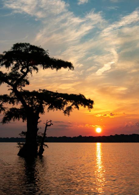 Sunrise Lone Cypress  7966 Reelfoot Lake Art | Koral Martin Fine Art Photography