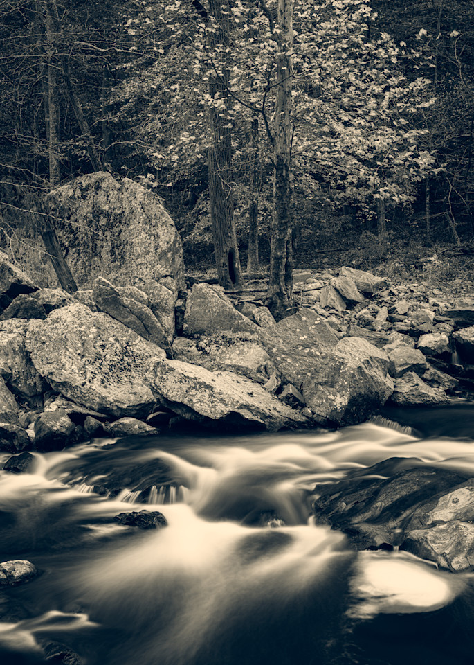 Nature Bw 1588 Photography Art | Dan Chung Fine Art