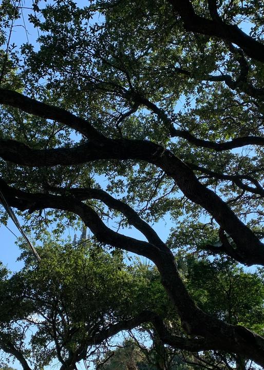Tree & Sky Art | Nisha Strain