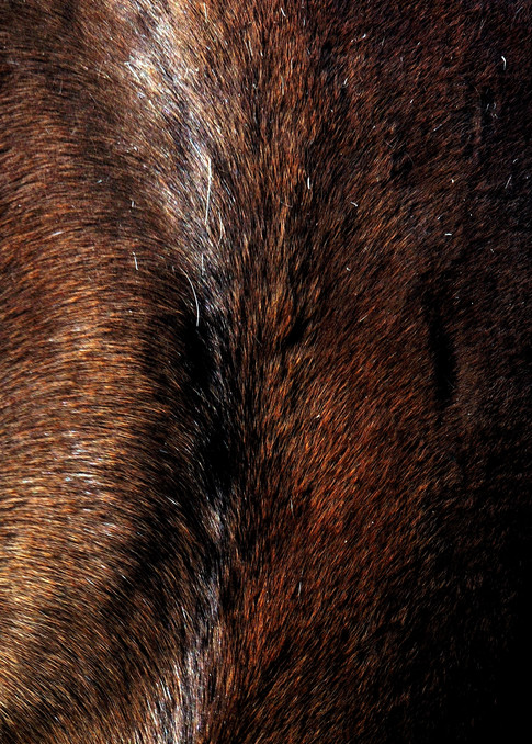 Abstract Horse Face 2