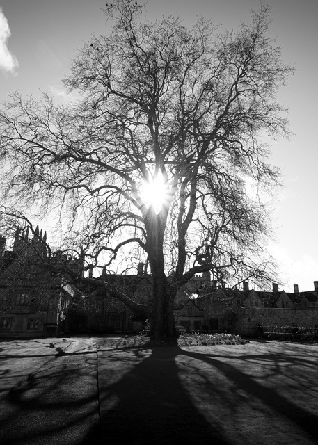 Magdalen College Tree Photography Art | Lodge Photo