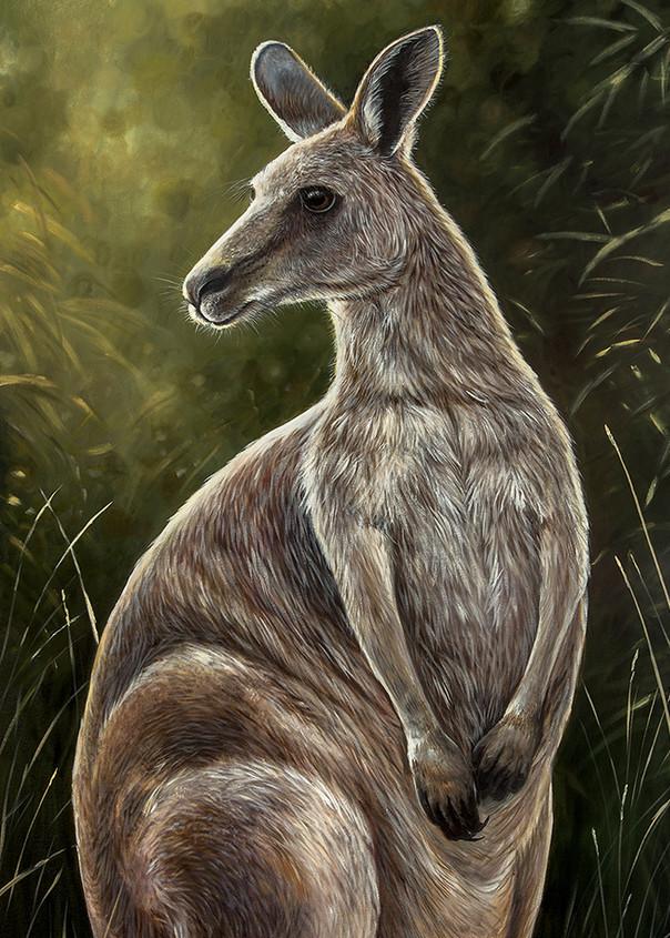 Molly - Eastern Grey Kangaroo