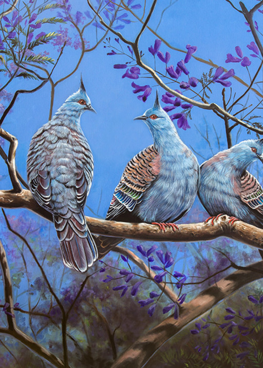 Jacaranda Haven - Crested Pigeons