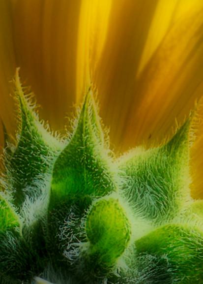 Backside Of The Sun Photography Art | Ed Sancious - Stillness In Change