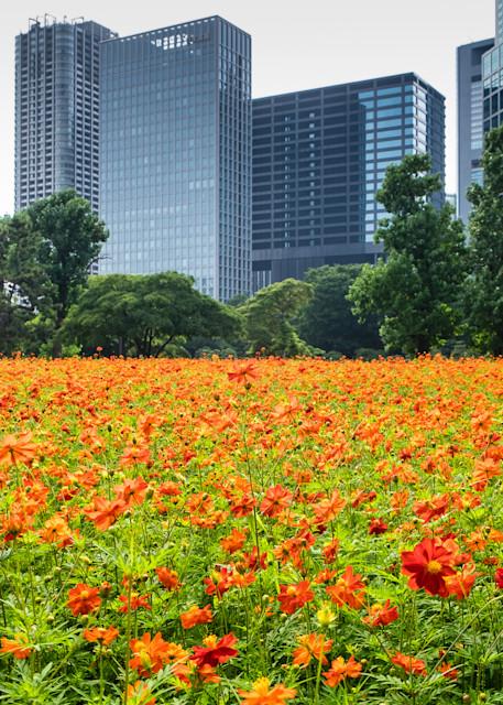 Tokyo Urban Flowers, Japan