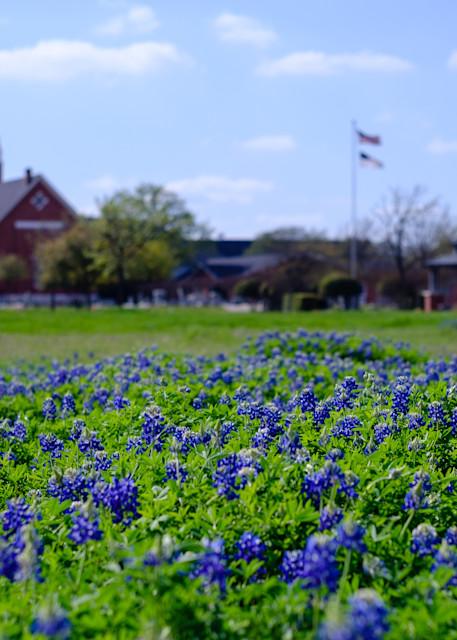 Texas Bluebonnet Church