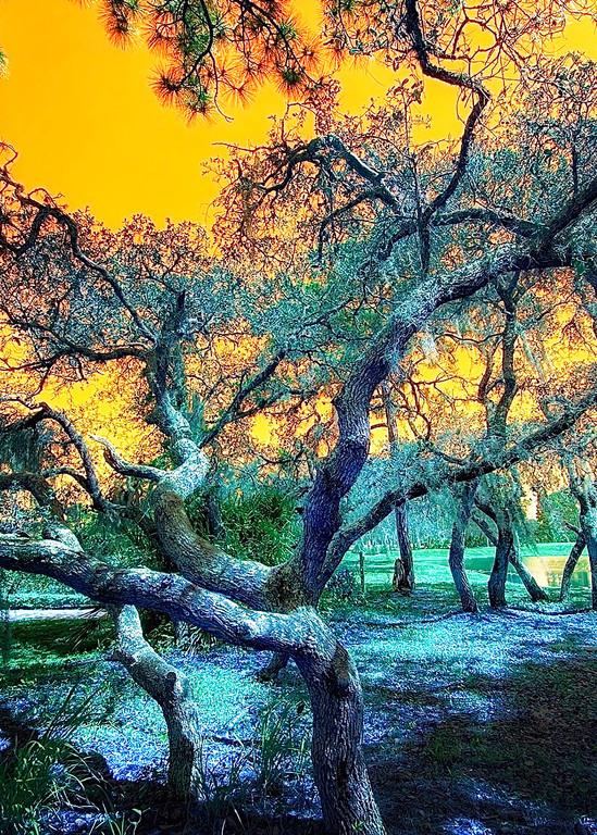 Botanical Rainbow Tree Art   Mark Stall IMAGES