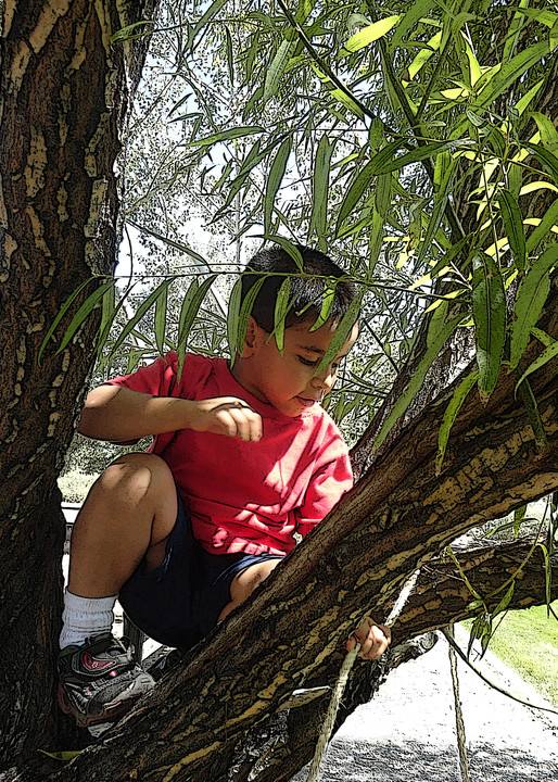 Climbing A Tree Art | Art from the Soul