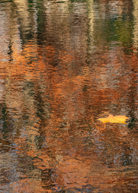 Leafinreflection  3692 Art | Koral Martin Fine Art Photography