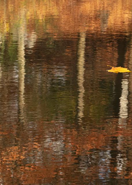 Leafin Reflection 3705 Art | Koral Martin Fine Art Photography