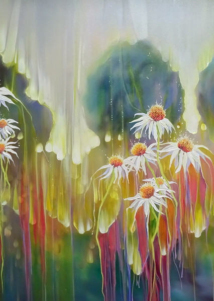 prints on canvas or paper of white daisies in summer meadow