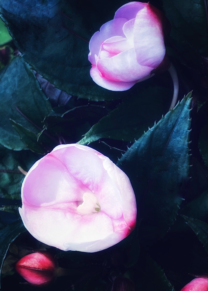 Blooming Duo Photography Art | Kathleen Messmer Photography