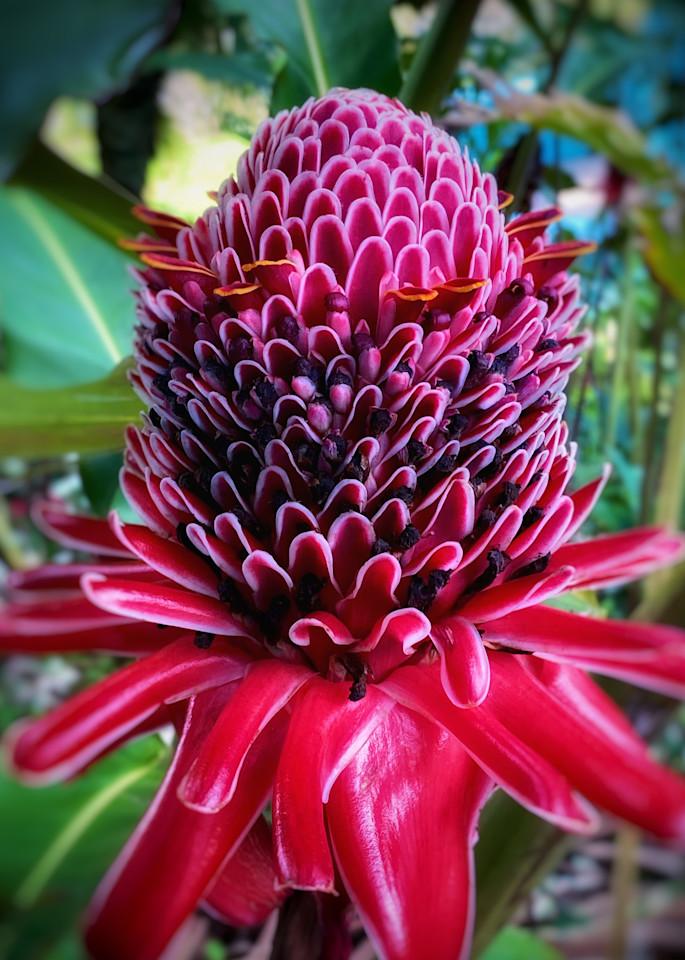 Costa Rica Flower Photography Art | Kathleen Messmer Photography