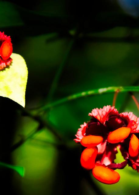 Hearts-a-Burstin - A Fine Art Photograph by Marcos R. Quintana