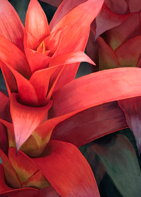 Bromeliad Art | victoriabishop.art