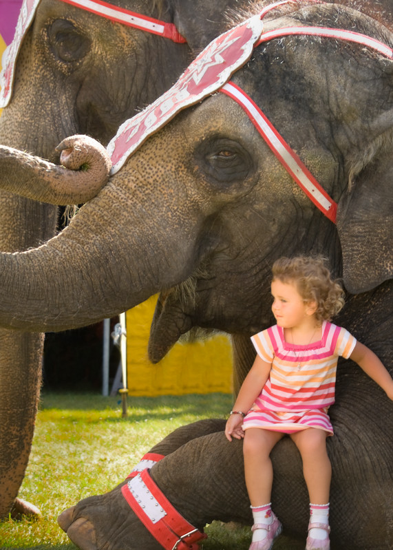 A Girl And Her Elephant Art | Mark Stall IMAGES