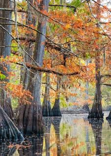 Tranquility - Louisiana swamp fine-art photography prints