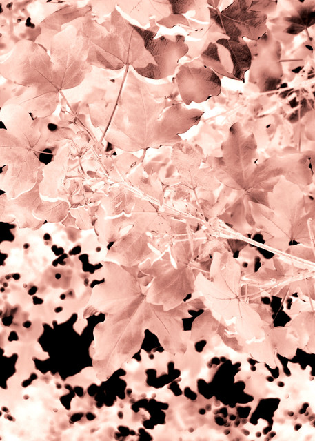 Autumnal Leaves Art   onlythemoon