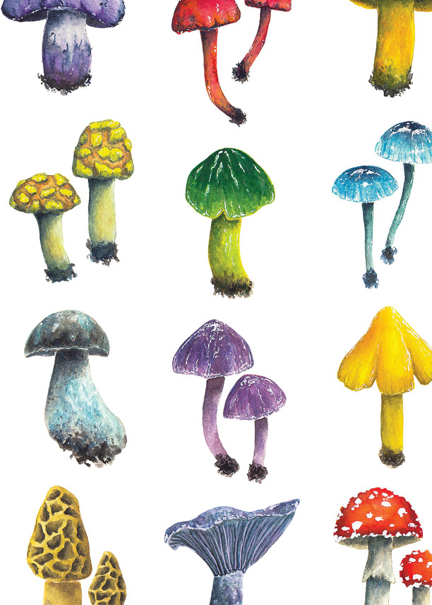 Fungi  Art   Cool Art House - online art gallery with hip emerging artists. Collect cool art you can view on your own wall before you invest!
