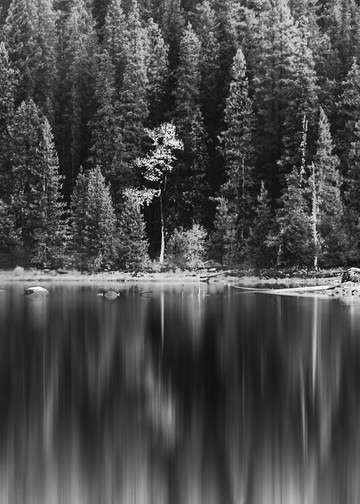 Lake Wenatchee Monochrome Reflections Photography Art | Austin Marvel