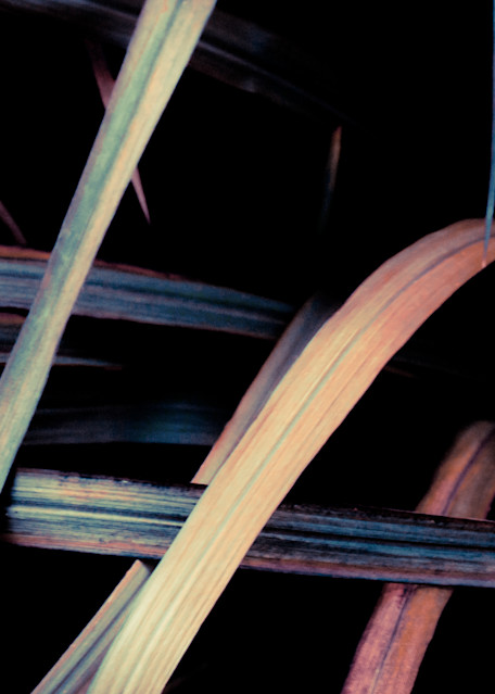 Grass (Early Autumn) No. 1 Art | Anna Jaap Studio