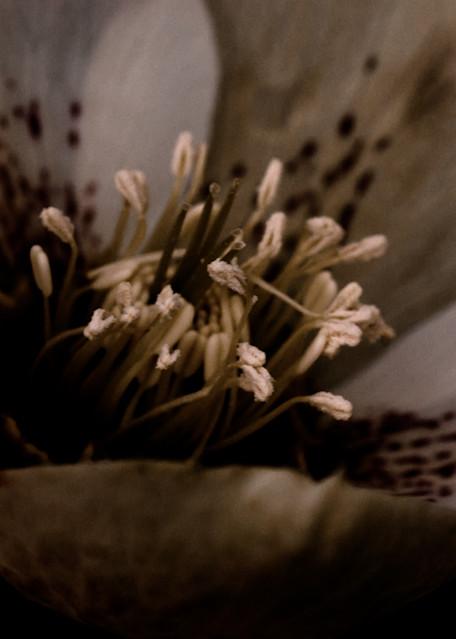 Convergence (Blossom) Art | Anna Jaap Studio