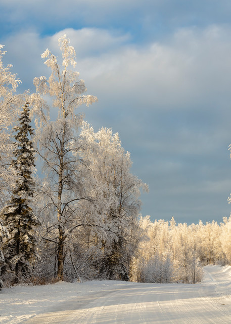 Hoarfrost covered  trees in Alaska.