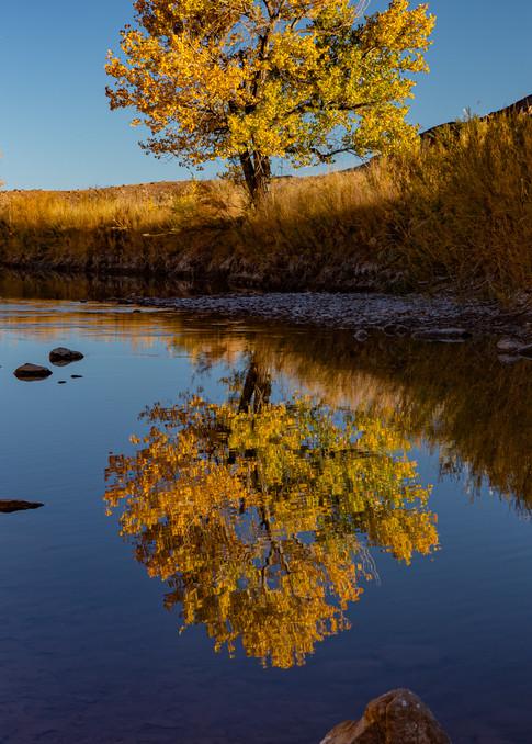 The Good Tree Photography Art | Alex Nueschaefer Photography