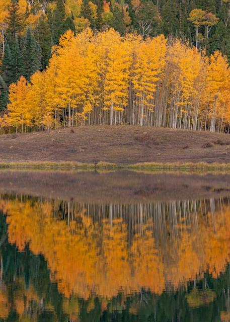 Aspen Glow Photography Art | Alex Nueschaefer Photography