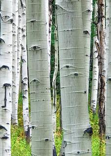 Nature's Barcode  Photography Art | Alex Nueschaefer Photography