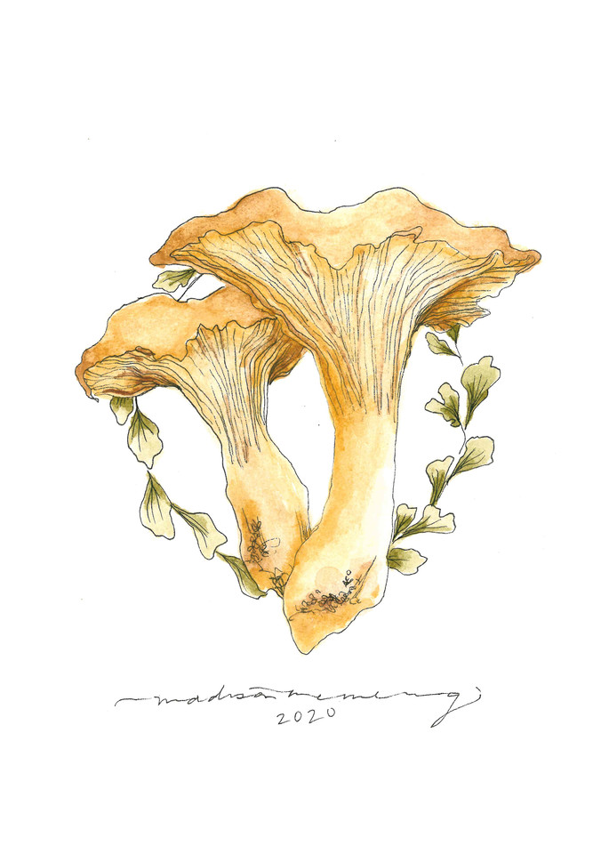 Chanterelle Mushroom  Art | Cool Art House - online art gallery with hip emerging artists. Collect cool art you can view on your own wall before you invest!