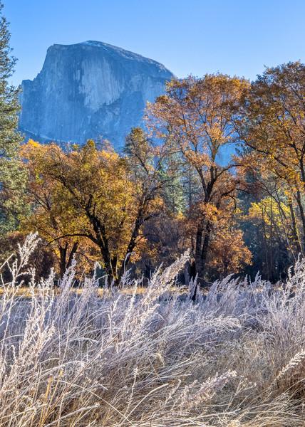 Autumn View, Half Dome Art | The Carmel Gallery