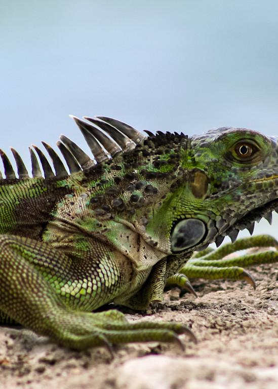 Iguana 2 Art   Thriving Creatively Productions