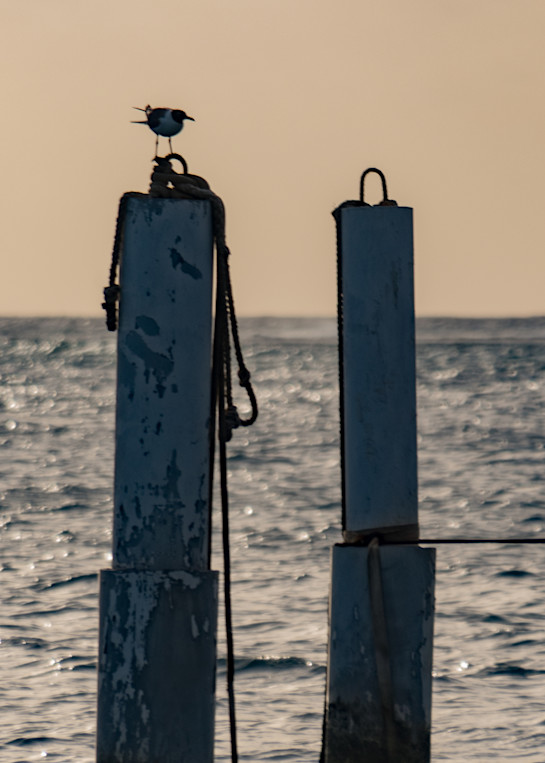 At Sea..Gull Art | Thriving Creatively Productions