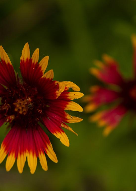 Blackeye Flower Art   Thriving Creatively Productions