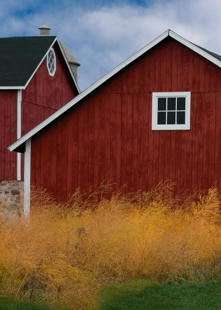 Yellow Bushes On A Red Barn Day Photography Art | Mark Stall IMAGES