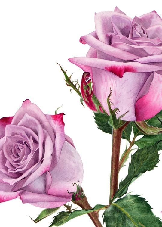 Deep Purple Rose Art | victoriabishop.art