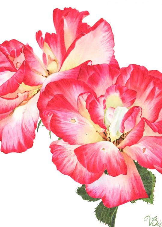 Grandiflora Roses  Art   victoriabishop.art