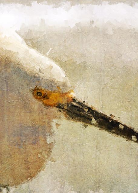 Florida Bird Art | R.j.Ricci Art