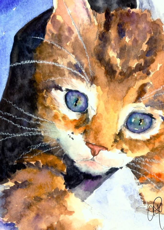 Blue Eyed Kitten Art   Christy! Studios