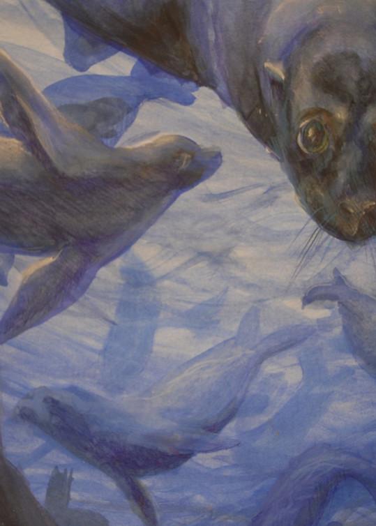 Seals With A Kiss Art | Nosco Fine Art