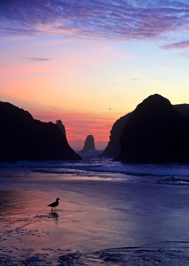 Gull At Sunset, Bandon Art | Shaun McGrath Photography